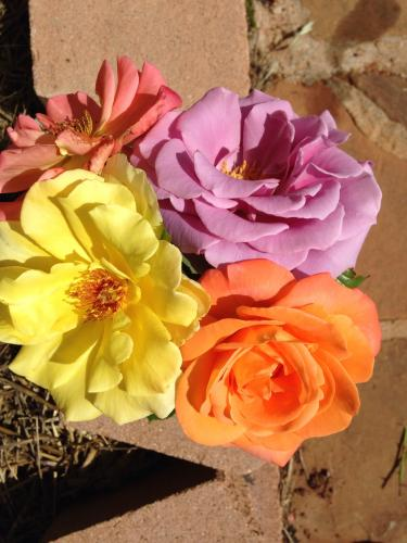 A few of my roses this year