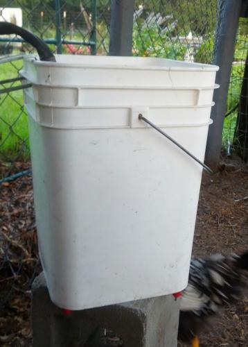 Automatic Chicken Waterer