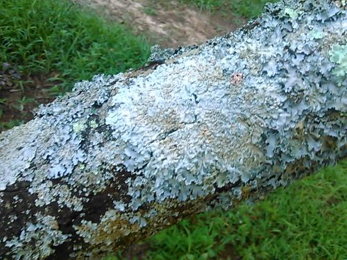 is this fungus killing my fruit trees