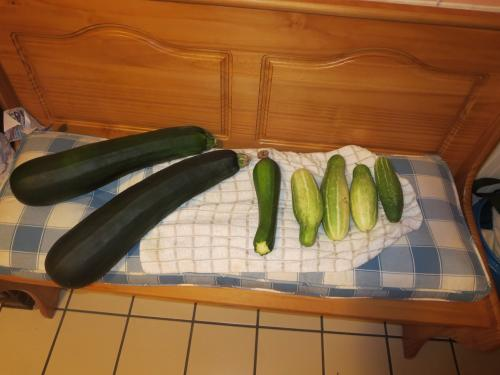 3 zucchinis and 4 cucumbers