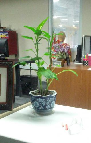 Plant at work