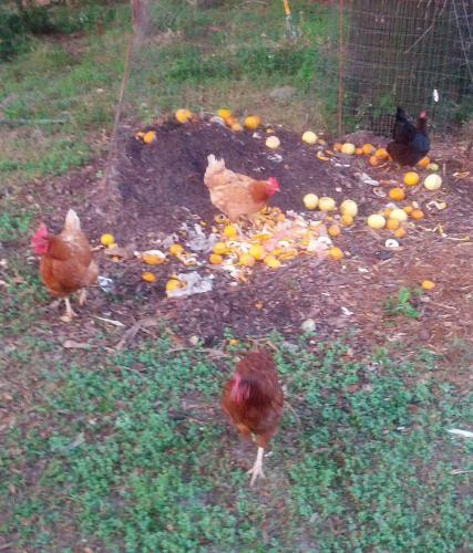 Chickens and Compost