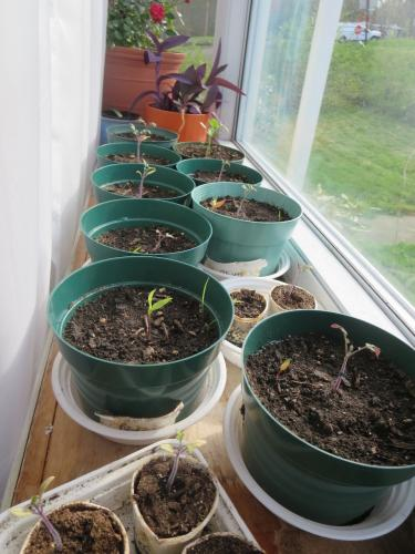 Seedlings growing very slowly if at all...