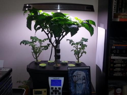 Aerogarden of Hope in full 23 August 2015