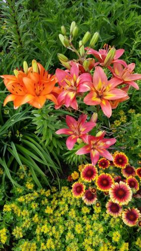 Flowers in my garden...
