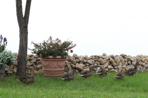 Ducks...