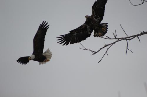 Eagles...