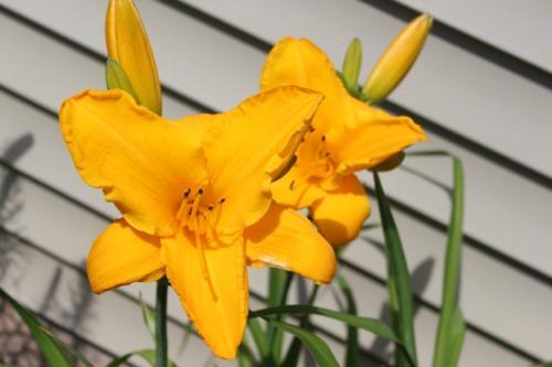 Sparkling Orange...