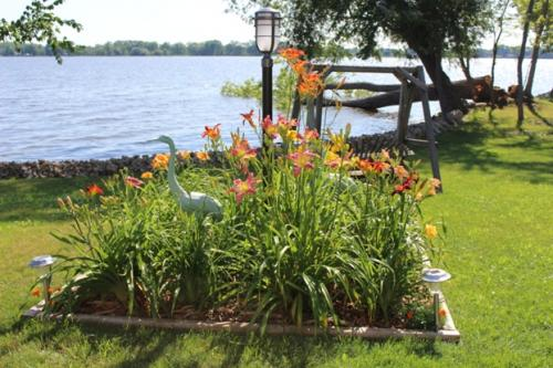 Daylily bed...