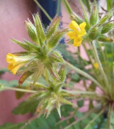 idk plant